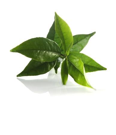 green-tea-photo-page.jpg