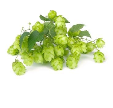 hops-photo-page.jpg