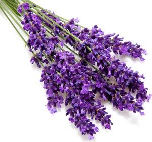 lavender-page.jpg