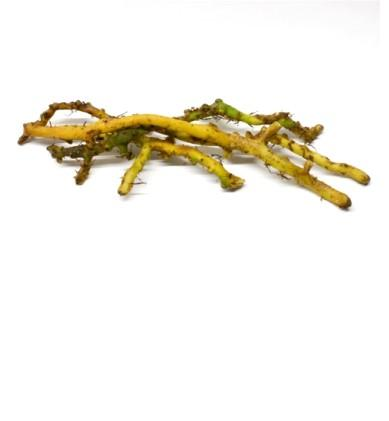 licorice-root-photo-page.jpg