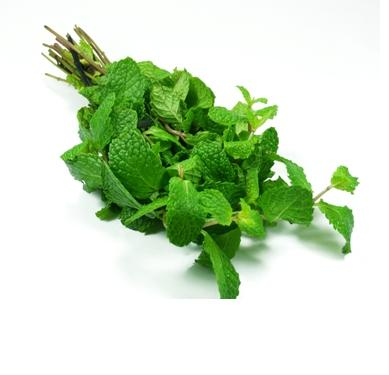peppermint-leaves-photo-page.jpg