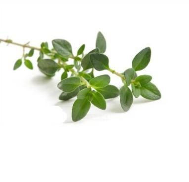thyme-photo-page.jpg